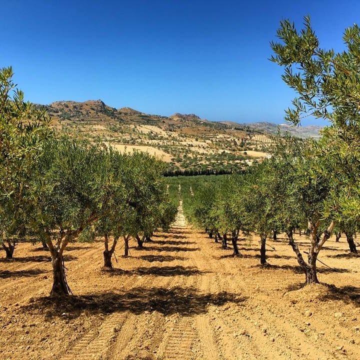 マンドラノーバはシチリア島の南沿岸部、パルマ・ディ・モンテキァーロでオリーブとアーモンドを造る家族経営の農家です。無農薬栽培と革新的な技術の投入で、高品質なオリーブオイルを手掛けていることで定評があります。